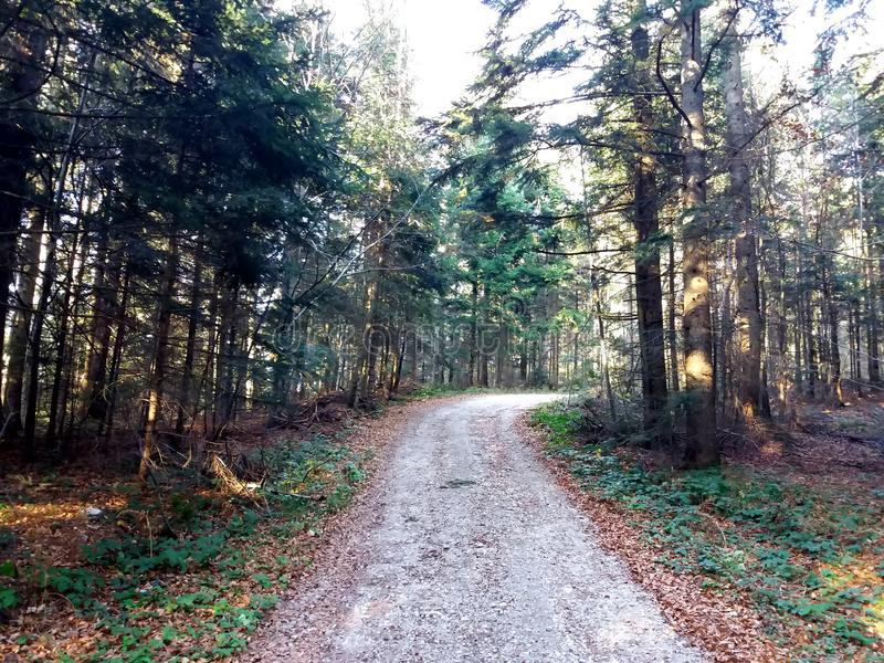 Przejście pasa ruchu ścieżka Z Zielonymi drzewami w Lasowej Pięknej alei, droga W parku Sposób Przez lato lasu obraz royalty free