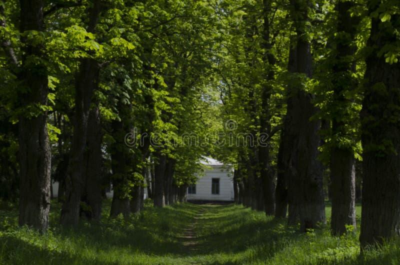 Przejście pasa ruchu ścieżka Z Zielonymi drzewami w Lasowej Pięknej alei W parku Droga przemian sposób Przez Ciemnego lasu zdjęcie stock