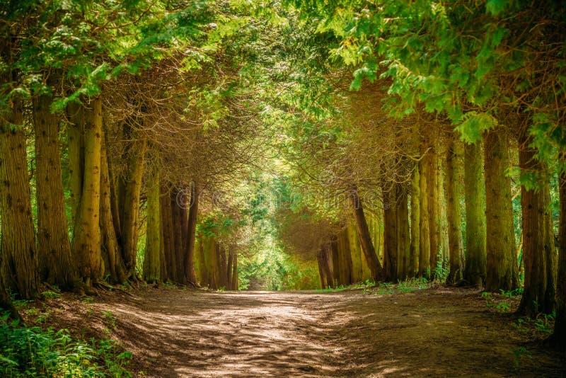 Przejście pasa ruchu ścieżka Z Zielonymi drzewami w lesie zdjęcie stock