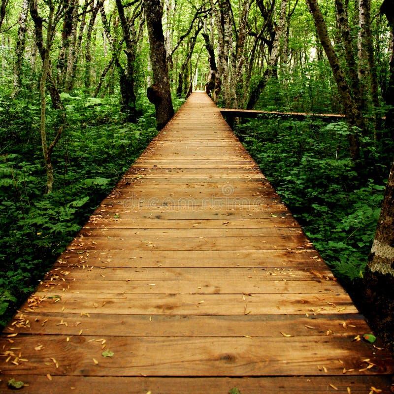 Przejście przez lasu zdjęcie stock