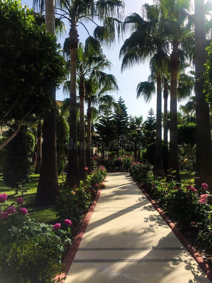 Przejście w palma parku zdjęcia stock