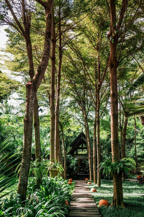 Przejście w tropikalnym parku z dużym drzewem wewnątrz i małym pawilonem obraz stock