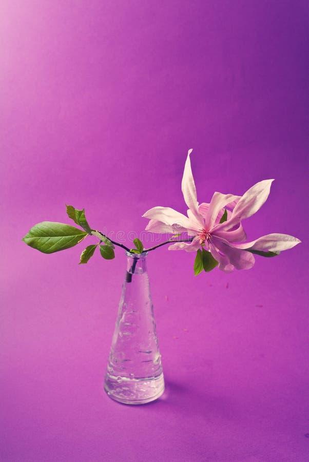przejrzysty gałęziasty magnoliowy garnek zdjęcie stock