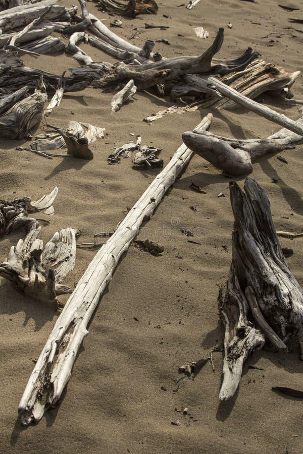 Przekątna, bielący driftwood logował się piaskowatą plażę flagstengi Lak obraz royalty free