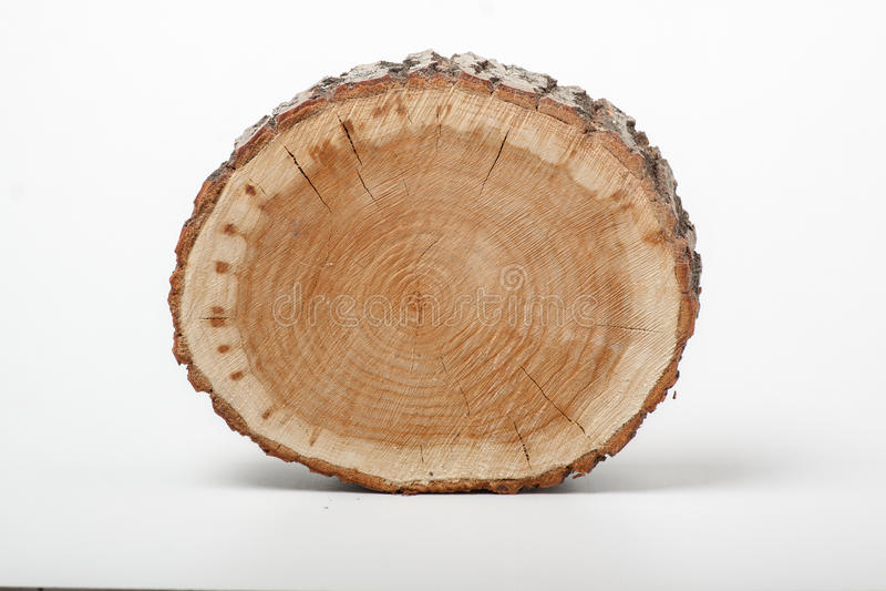 Przekrój poprzeczny drzewny bagażnik na białym tle zdjęcia stock