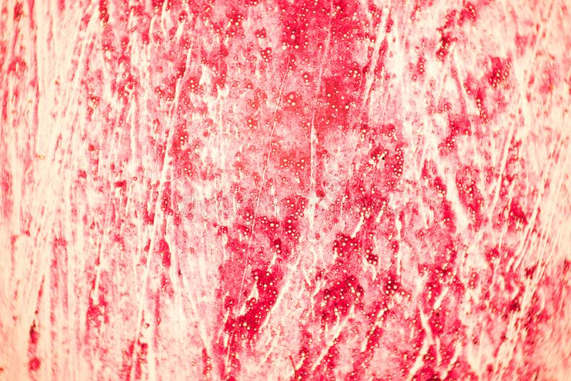 Przekrój poprzeczny ludzka tkanka w mikroskopu widoku obraz royalty free