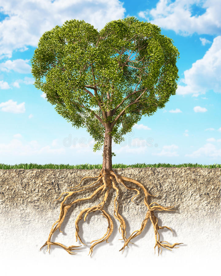 Przekrój poprzeczny pokazuje drzewnego serce kształtującego ziemia, z swój korzeniem obraz royalty free
