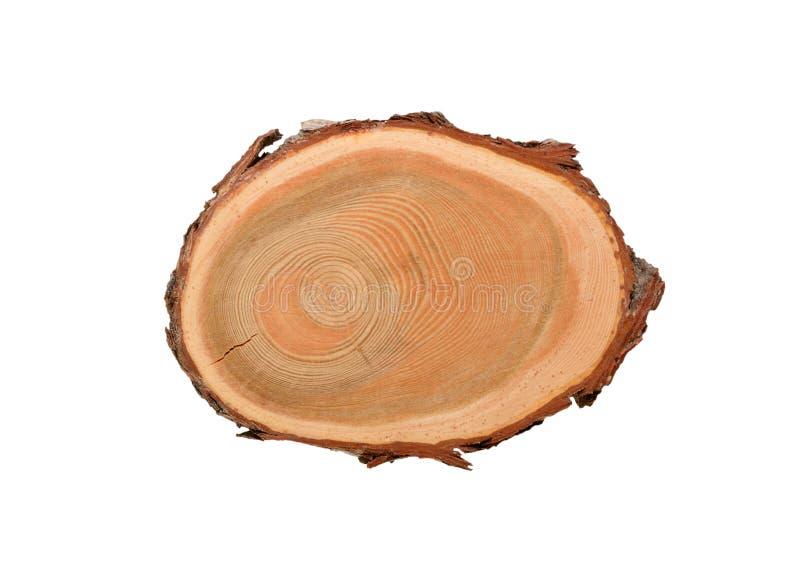 Przekrój poprzeczny trzonu drzewo obrazy royalty free