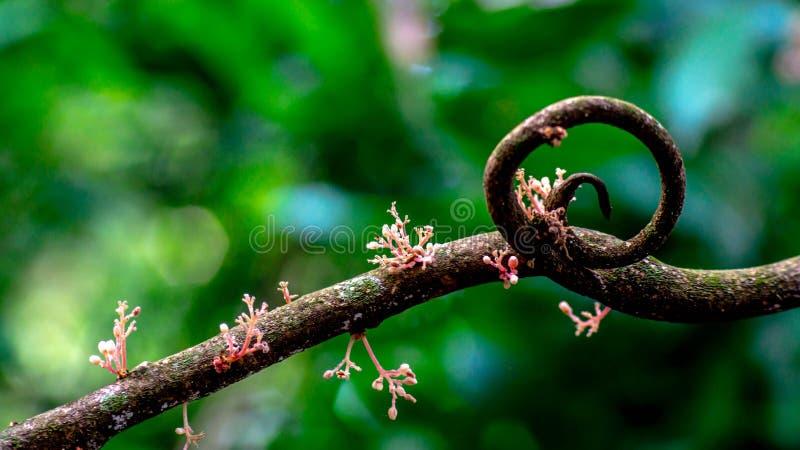 Przekręca gałąź drzewo z kwiatem w lesie zdjęcia stock