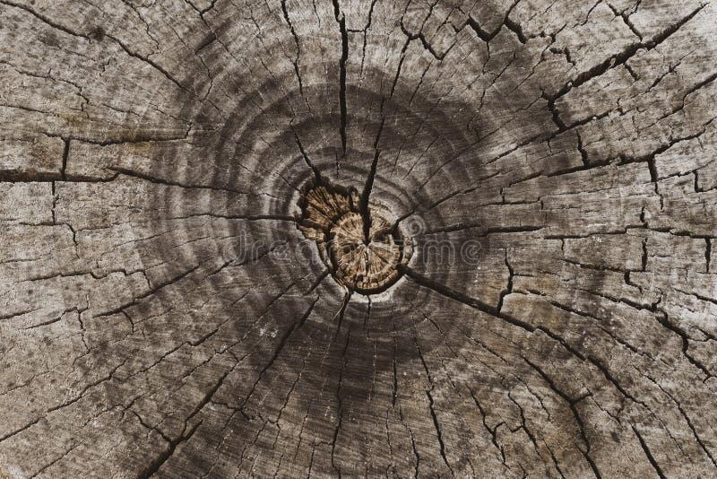 Przekr?j poprzeczny drzewny baga?nik Fiszorka tło, naturalny wzór Odg?rny widok Stara drzewna drewniana tekstura zdjęcia stock