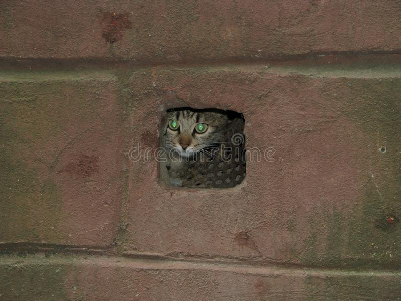 Przelękły kot chujący w suterenowej wentylacji zdjęcie stock