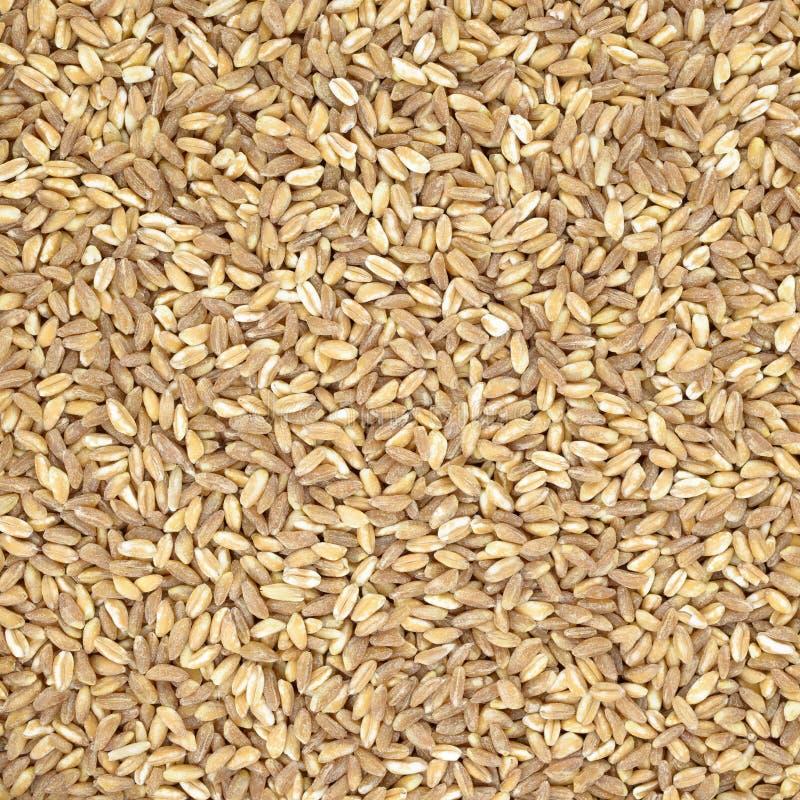 Przeliterowana organicznie pszeniczna zboże tekstura, tło lub fotografia stock