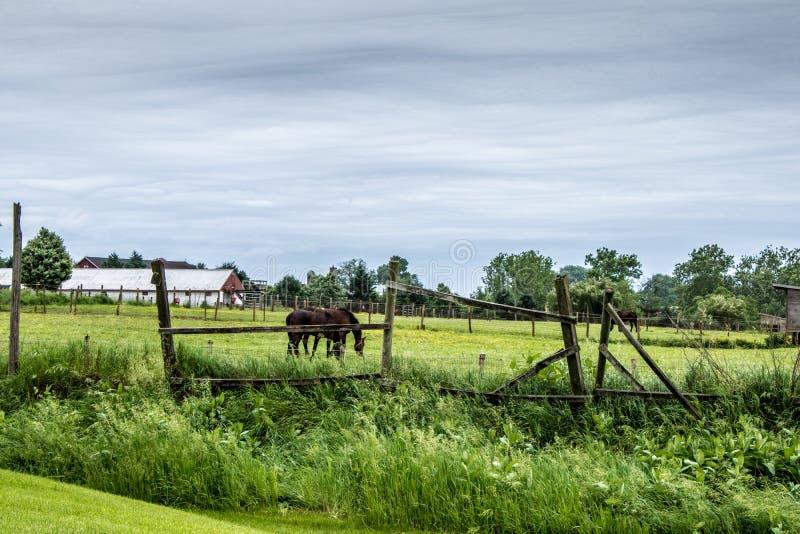 Przelotne spojrzenie tradycyjny styl życia w Amish wiosce, Pennsylwania fotografia royalty free