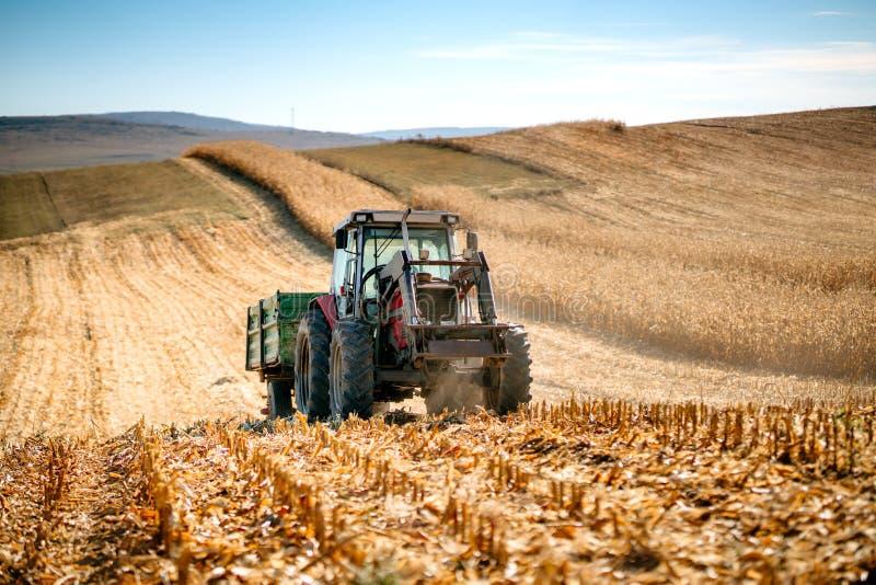 Przemysłowy ciągnik z przyczepą pracuje kukurydzanych pola i zbiera podczas sezonu jesiennego zdjęcie stock