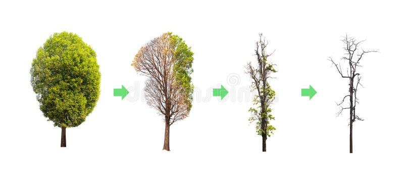 Przenosi życie drzewo Od zupełnego drzewa fotografia stock