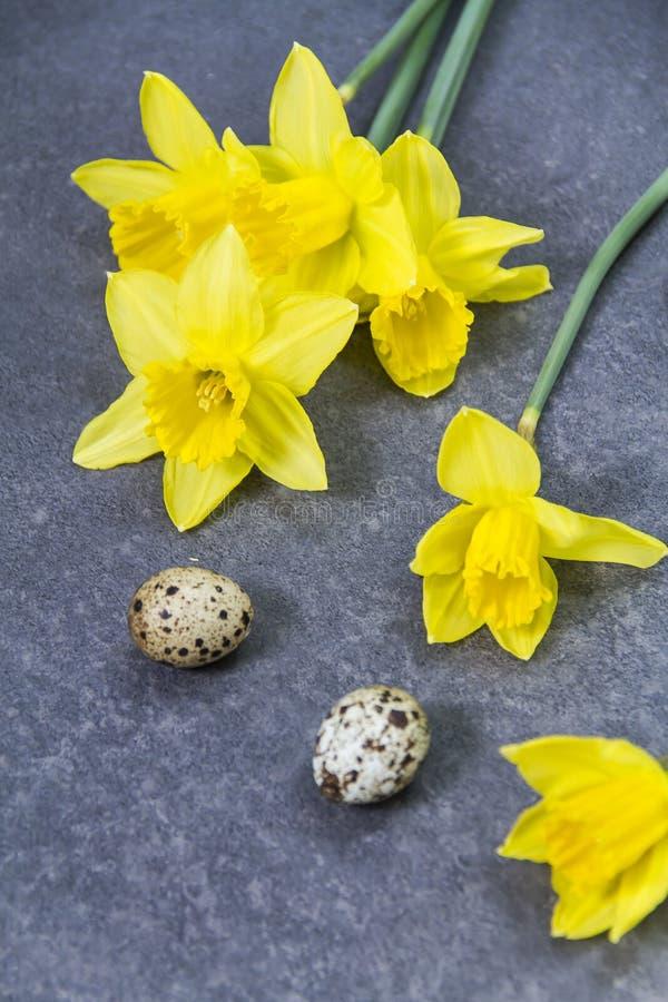 Przepiórek daffodils i jajka zdjęcia stock