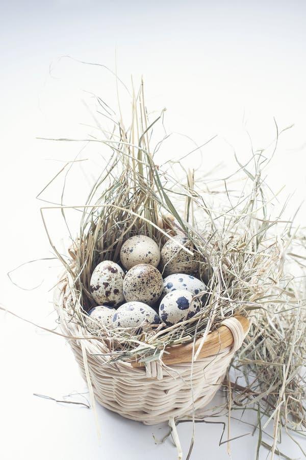 Przepiórek jajka na słomie w koszu obraz royalty free