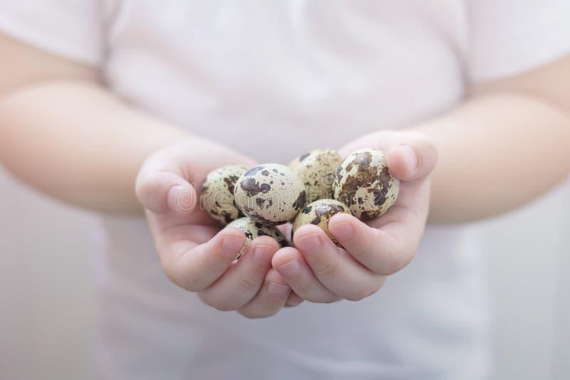Przepiórek jajka trzyma w małych dzieciaka ` s rękach obrazy stock