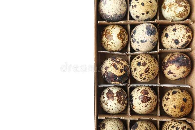 Przepiórek jajka w kartonu pudełku odizolowywającym na białym tle obrazy stock