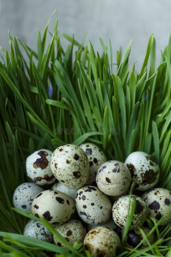 Przepiórek jajka w trawie obrazy stock
