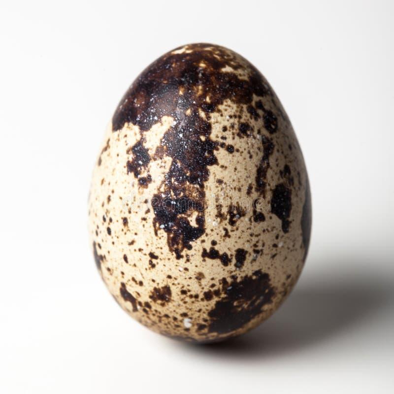 Przepiórka egg zdjęcie royalty free