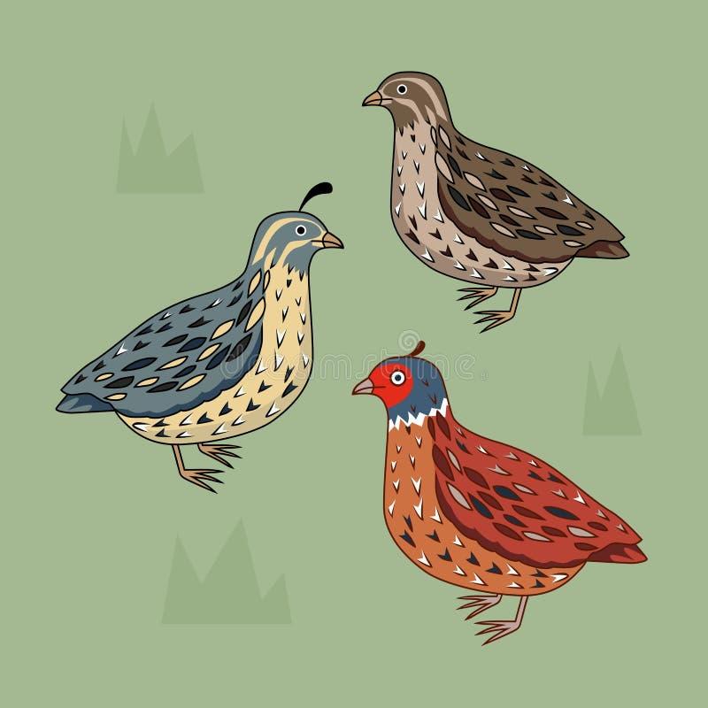 przepiórka Kalifornia przepiórka Błękitny ptak Brown ptak ptak jaskrawy royalty ilustracja