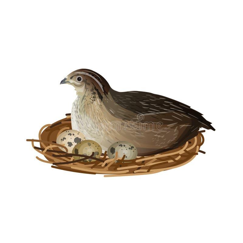 Przepiórka przy gniazdeczkiem ilustracji