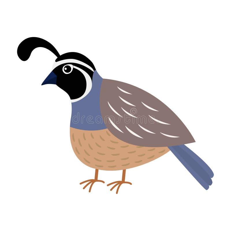Przepiórka ptak Śliczny postać z kreskówki Płaski projekt odosobniony Biały tło ilustracja wektor