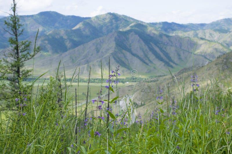 Przepustka w Halnym Altai piękny krajobraz obraz stock