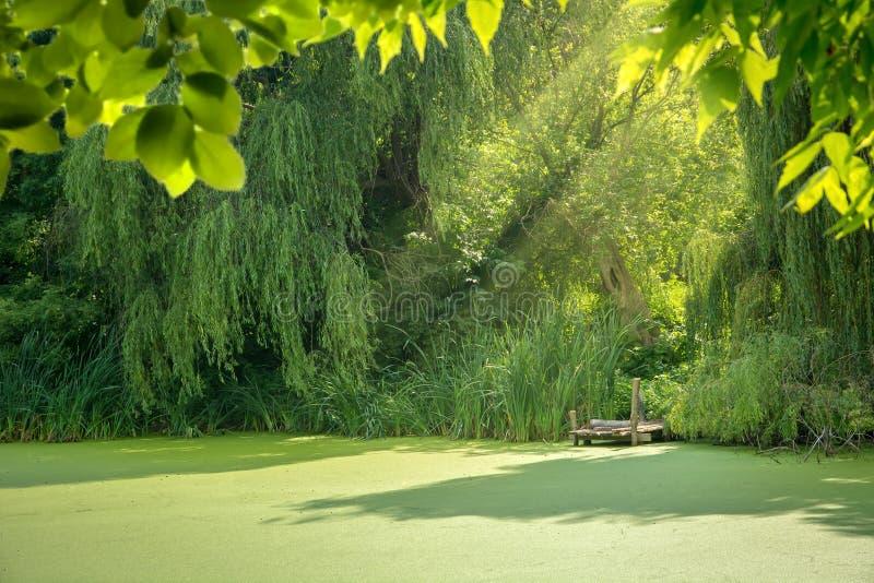 przerastający lato jezioro lasowy krajobraz zdjęcie royalty free