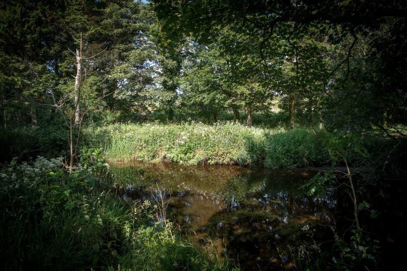 Przerwa w świetle słonecznym na rzeki Lugton Eglinton parku Irvine Szkocja i drzewach obraz royalty free