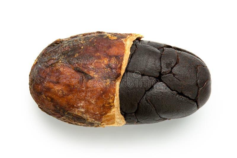 Przerzedżę piec połówka strugającej kakaowej fasoli na bielu obrazy stock