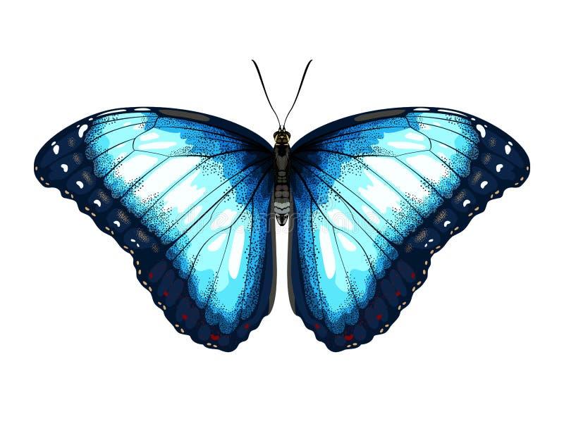 Przerzedże Błękitnego Motyliego morpho na białym tle ilustracja wektor