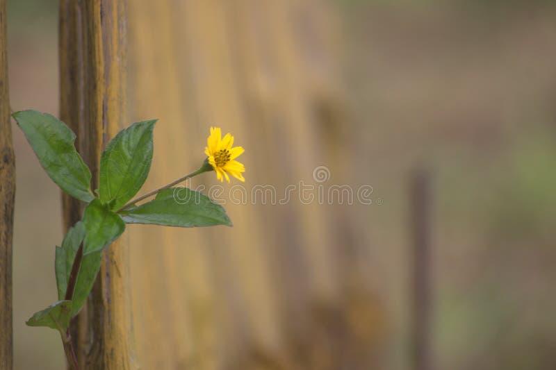 Przerzedże kwiatu w parku fotografia stock