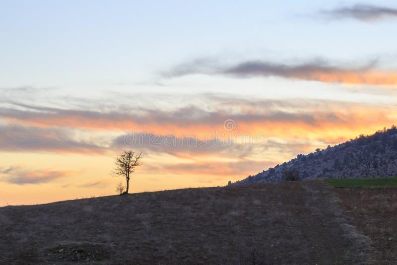 Przerzedże nagą drzewną sylwetkę podczas zmierzchu na toros górach fotografia royalty free