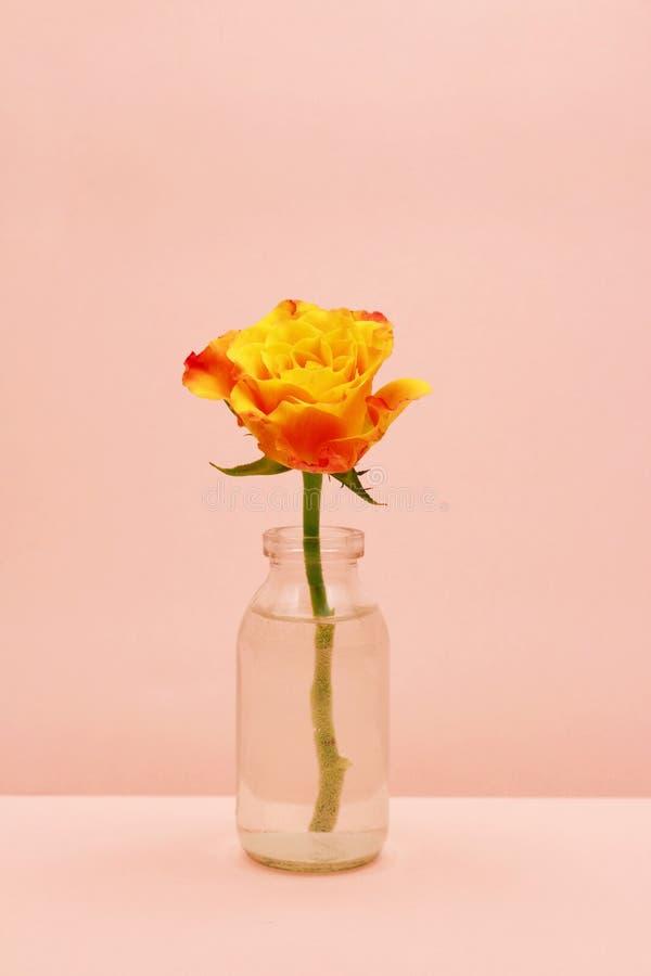 Przerzedże różanego w szklanej butelce na różowym tle zdjęcia stock