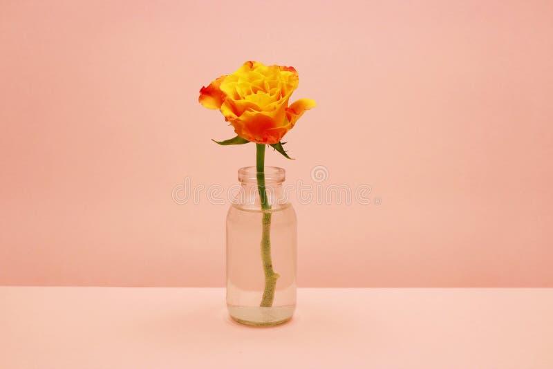 Przerzedże różanego w szklanej butelce na różowym tle obraz royalty free