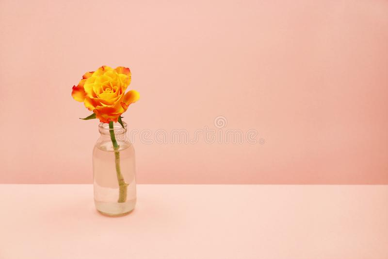 Przerzedże różanego w szklanej butelce na różowym tle fotografia royalty free