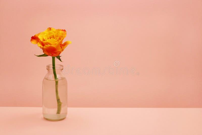 Przerzedże różanego w szklanej butelce na różowym tle obrazy royalty free