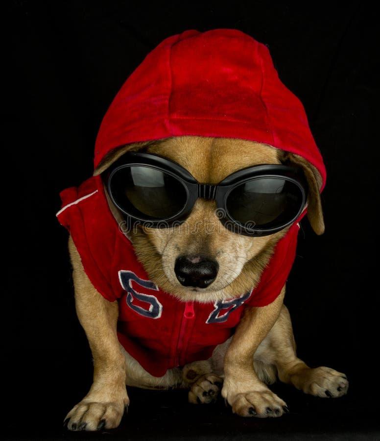 przestępca pies zdjęcia royalty free
