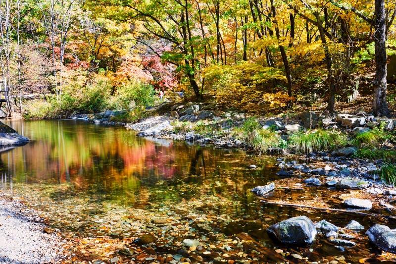 Przestawna imagein woda w jesieni scenicznej fotografia royalty free