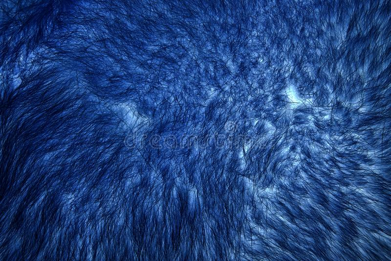 Przestawny wizerunek naturalny futerko czerwony biegunowy lisa zbliżenie fotografia royalty free