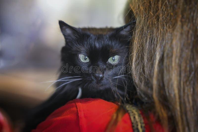 Przestraszony bezdomny czarny kot na ramieniu dziewczyna wolontariusz w schronieniu dla bezdomnych zwierząt Dziewczyna wp8lywy ko obrazy royalty free