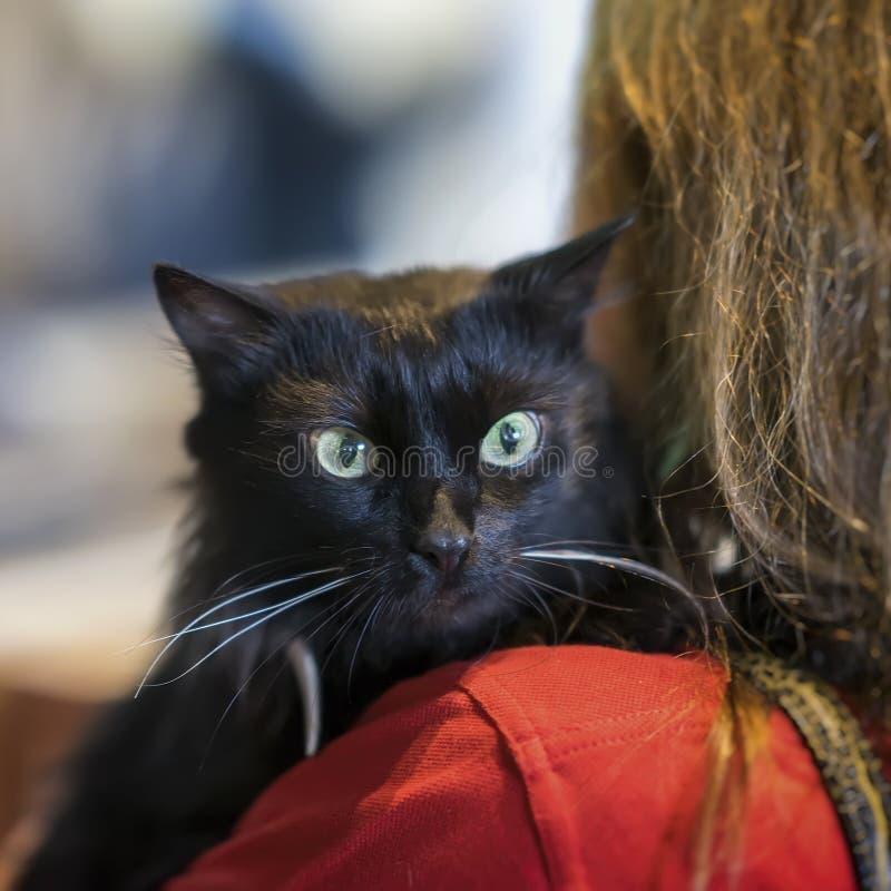 Przestraszony bezdomny czarny kot na ramieniu kobiety czekanie dla traktowania weterynaryjny przy zwierzęcą kliniką zdjęcie stock