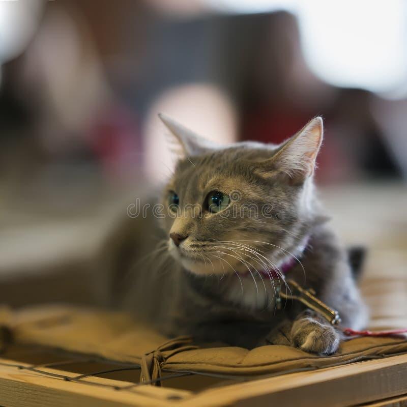 Przestraszony bezdomny samotny kot z przelękłym spojrzeniem, kłama na klatce w schroniskowym czekaniu dla domu, dla someone adopt fotografia stock