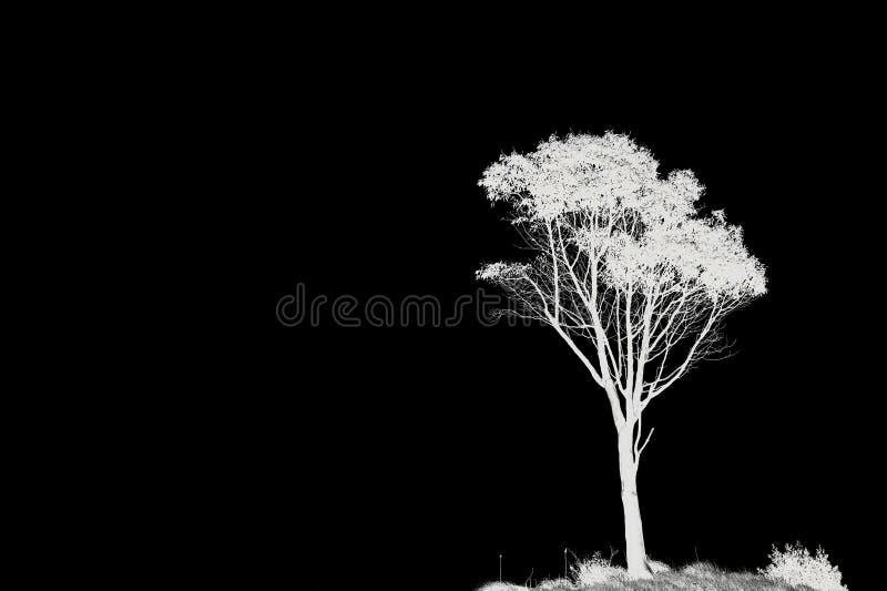 Przestrzeń i samotny drzewo fotografia stock