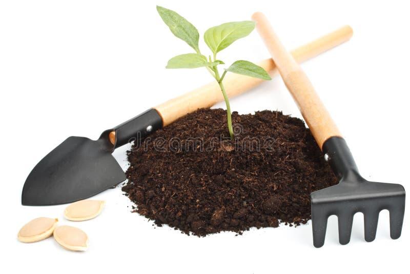 przeszczepu drzewo obraz stock