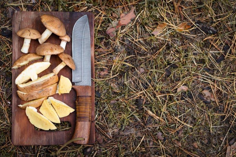 Przetrwanie w lasowym przygotowaniu pieczarki i kolekci obraz stock