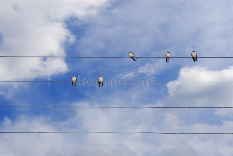 przewód ptaka zdjęcia stock