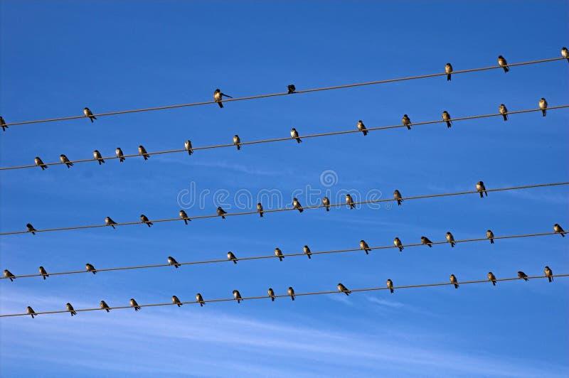 przewód ptaka zdjęcie stock